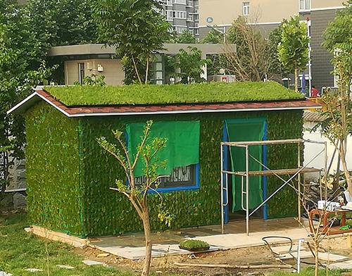 佛甲草屋顶绿化