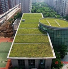 绿色大地简述:屋顶绿化的主要构造层