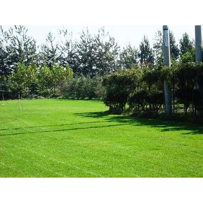 betway必威|欢迎光临绿化,郑州园林景观设计,绿色大地园林