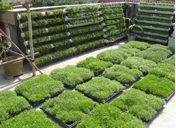betway必威|欢迎光临绿化,郑州城市绿雕施工